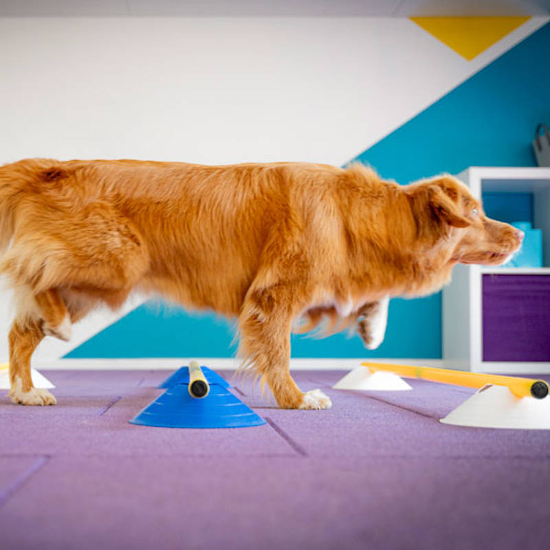 Fondations sports canins - Éducateur spécialisé en loisirs canins - Formation d'éducateur canin - AoA Formation