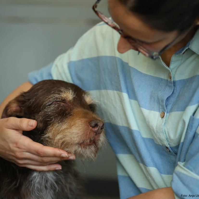 L'animal enchanté : Mieux vivre avec un chien hautement sensible - Éducateur spécialisé en soins alternatifs - AoA Formation