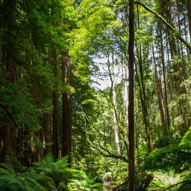 L'arbre de vie – la vie d'arbre - Éducateur spécialisé en soins alternatifs - AoA Formation