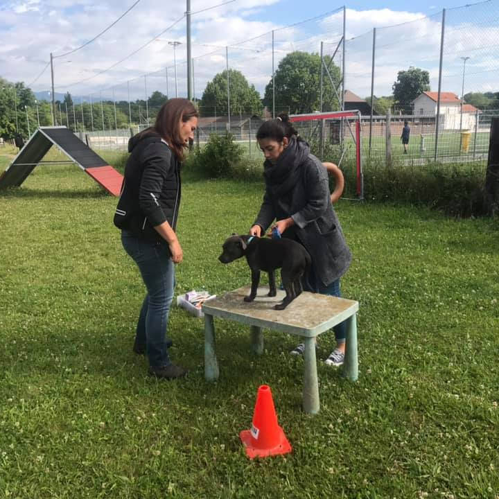 E : Medical Training, Soins coopératifs - Formation d'éducateur canin - AoA Formation