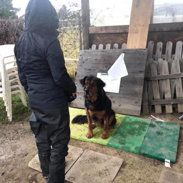 Schéma de renforcement et jeu - Éducateur spécialisé en loisirs canins - Formation d'éducateur canin - AoA Formation