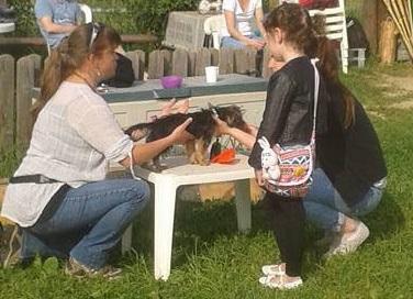 E1 : Medical Training, Soins coopératifs, perfectionnement - Formation d'éducateur canin - AoA Formation