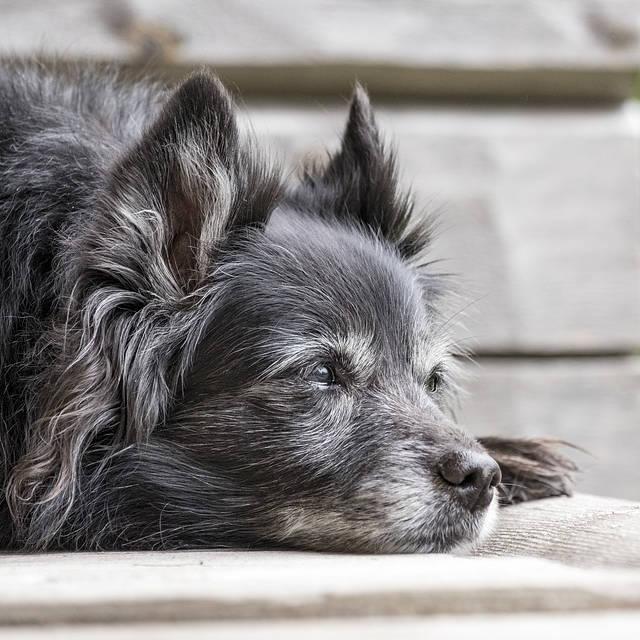 Tellington TTouch pour vous et pour votre chien senior - Éducateur spécialisé en soins alternatifs - AoA Formation