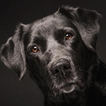 Brevet suisse, théorie et pratique - Formation d'éducateur canin - AoA Formation