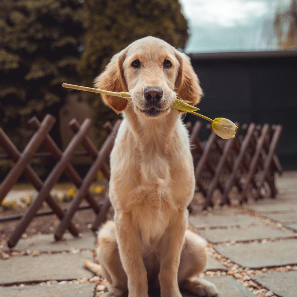 C6 + : Éducation du chien à la maison - Formation d'éducateur canin - AoA Formation