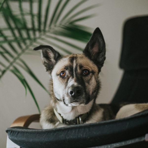 C6 : Éducation du chien à la maison, théorie - Formation d'éducateur canin - AoA Formation
