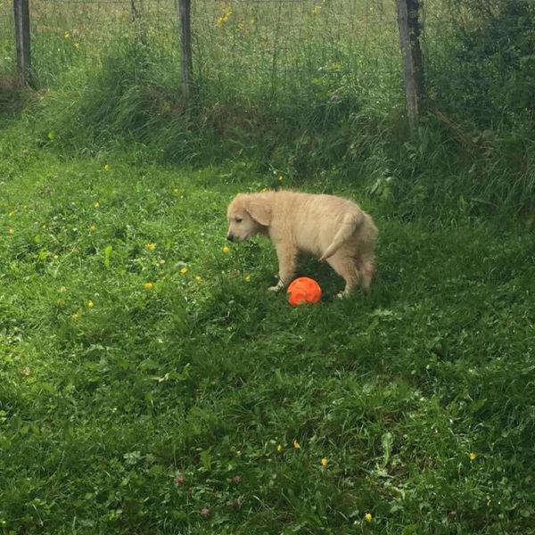 D1 : Prévention chiot, théorie - Formation d'éducateur canin - AoA Formation