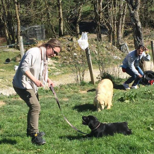 D2 : Prévention chiots, pratique - Formation d'éducateur canin - AoA Formation