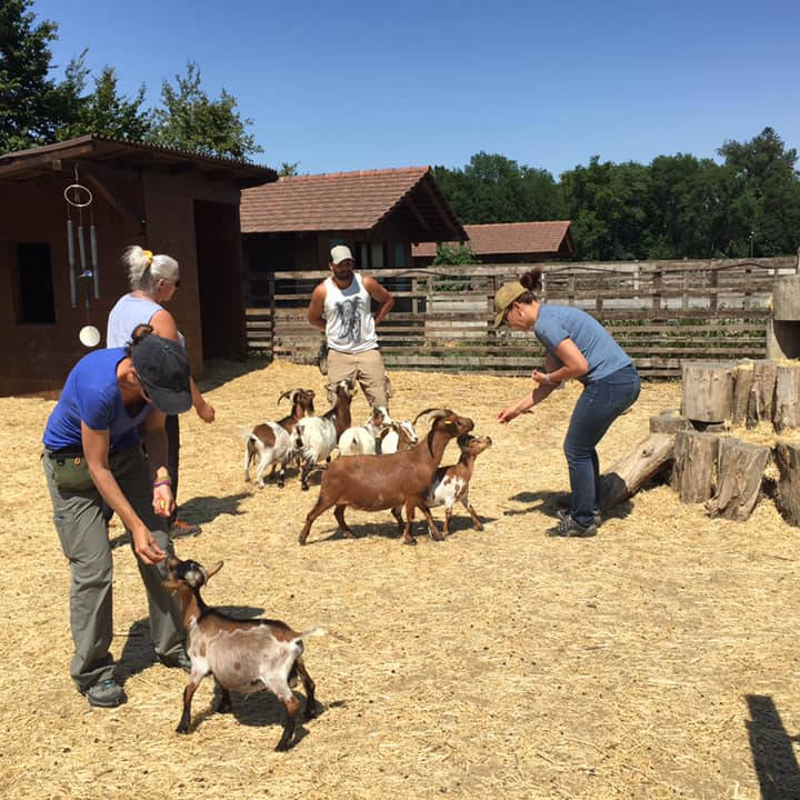 Clicker chèvres niveau 1 - AoA Formation