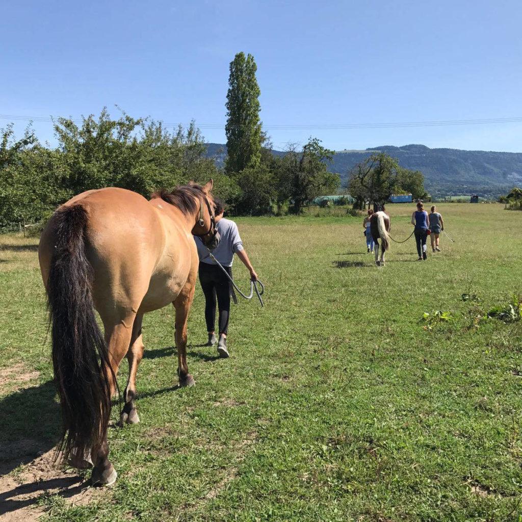 Clicker cheval niveau 2 - AoA Formation