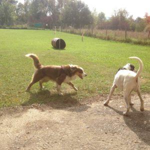 B : Communication, lecture du chien, social, communication intraspécique