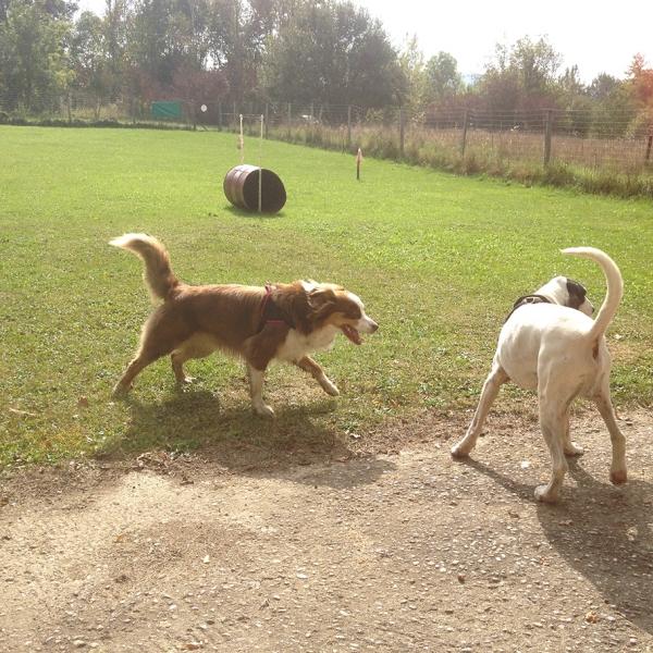 B : Communication, lecture du chien, social, communication intraspécique - Formation d'éducateur canin - AoA Formation