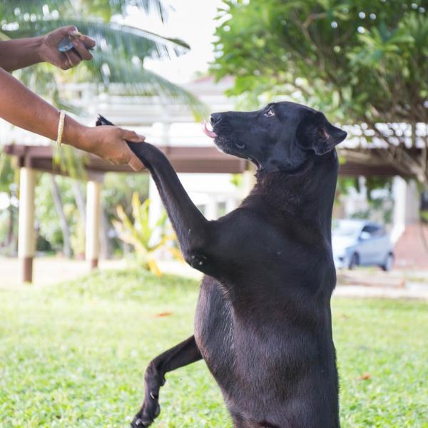 Éducateur spécialisé en rééducation et comportement canins - AoA Formation