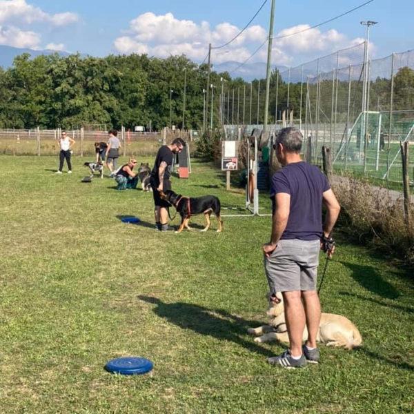 Cours collectifs - Formation d'éducateur canin - AoA Formation
