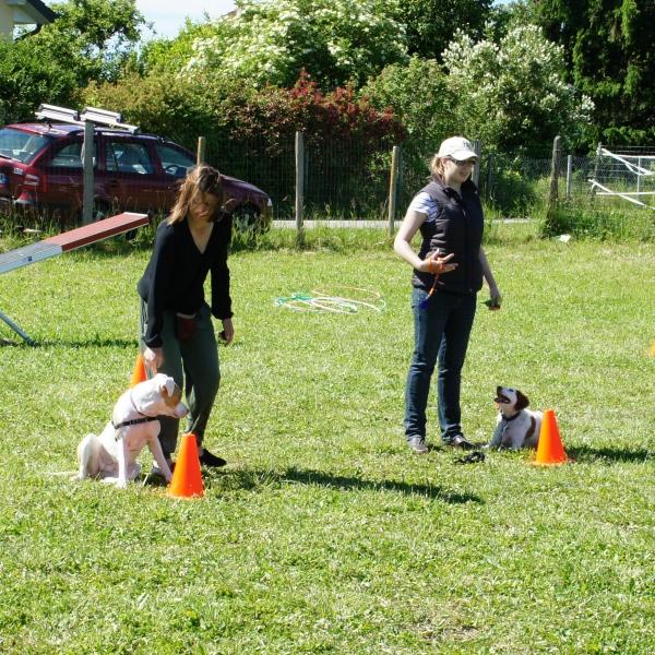 C3 + : Donner des cours - Formation d'éducateur canin - AoA Formation