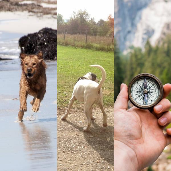Tronc commun, Formation d'éducateur canin - AoA Formation, Genève