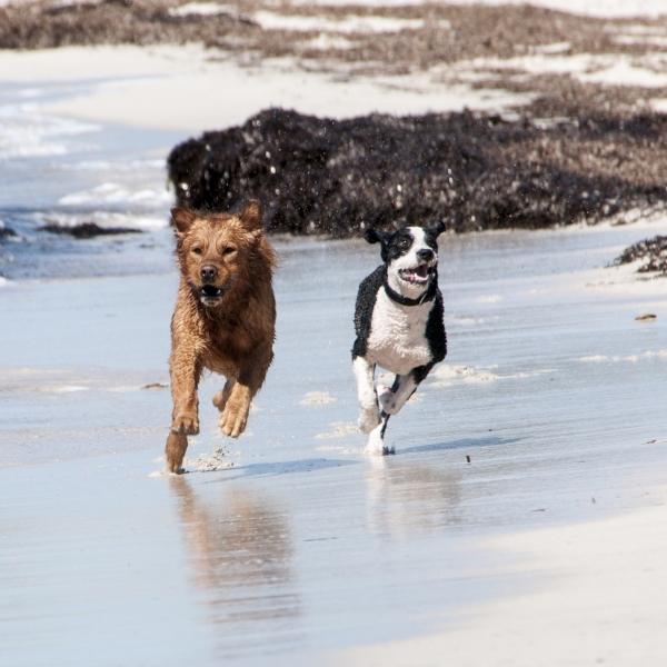 A : Besoins de l'espèce canine - Formation d'éducateur canin - AoA Formation