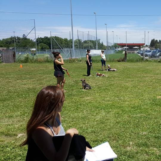 Révision pratique examen - Formation d'éducateur canin - AoA Formation