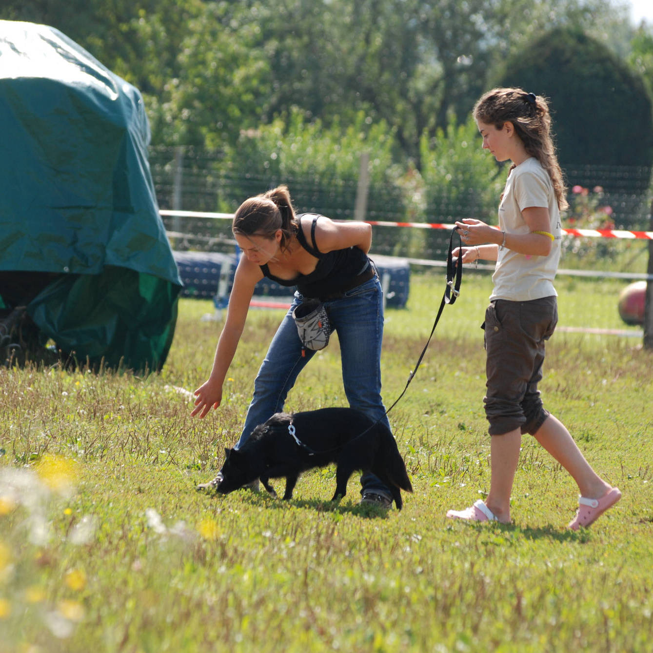 Flair - C5 : Initiation aux sports canins - Formation d'éducateur canin - AoA Formation