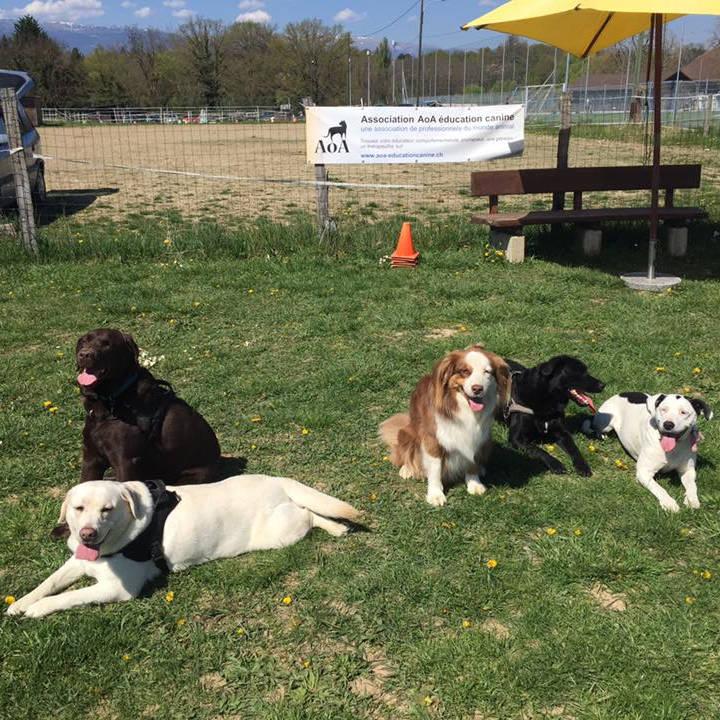 Formation d'éducateur canin - AoA Formation
