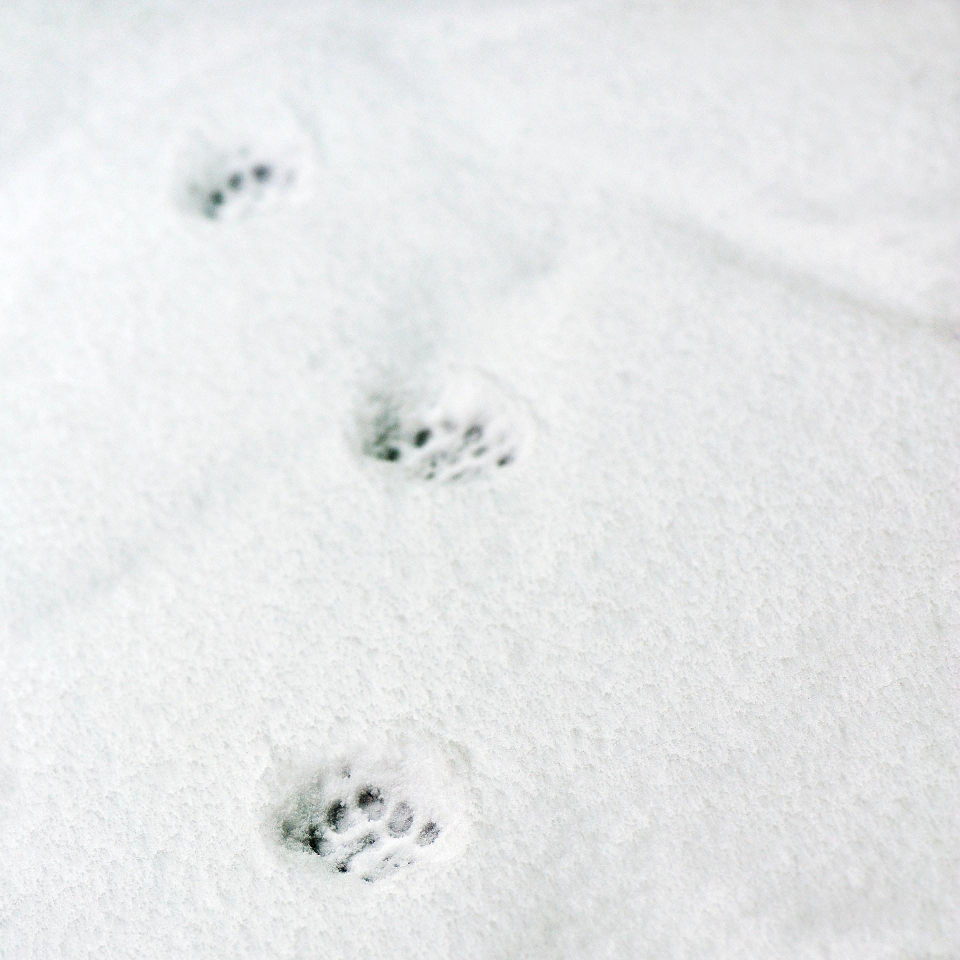 Séance d'information - Formation d'éducateur canin - AoA Formation