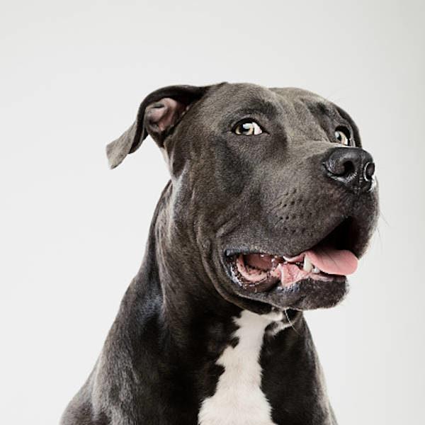 1 : Désensibilisation graduelle, pratique - Formation en rééducation et comportement canin - AoA Formation
