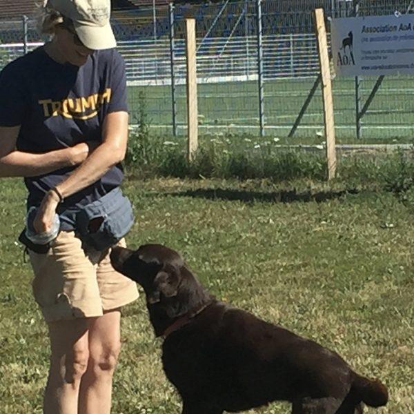 C2 : Éducation de base, pratique - Formation d'éducateur canin - AoA Formation