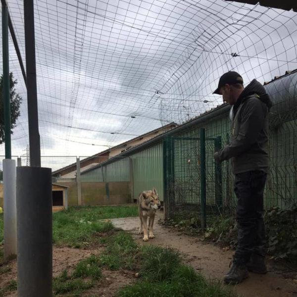 3 : Travail de chiens de refuges - Formation en rééducation et comportement canin - AoA Formation
