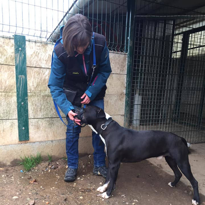 3 + : Travail de chiens de refuges - Formation en rééducation et comportement canin - AoA Formation