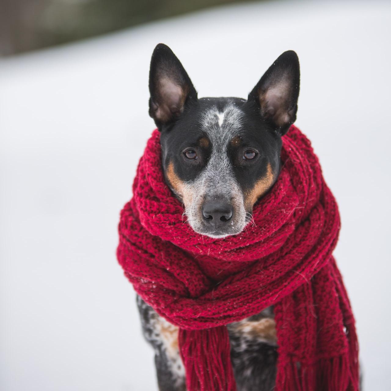 Module vétérinaire, santé et prophylaxie du chien - Formation d'éducateur canin - AoA Formation