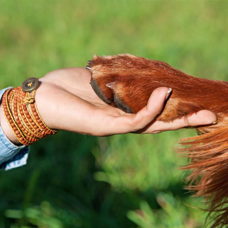 Éducateur spécialisé en éducation du chien de compagnie (éducation à la maison) - Formation d'éducateur canin - AoA Formation
