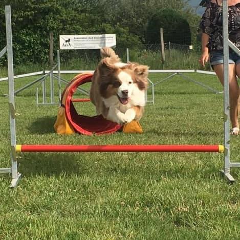 Éducateur spécialisé en loisirs canins (Agility, Hooper, treiball, freesbee) - Formation d'éducateur canin - AoA Formation