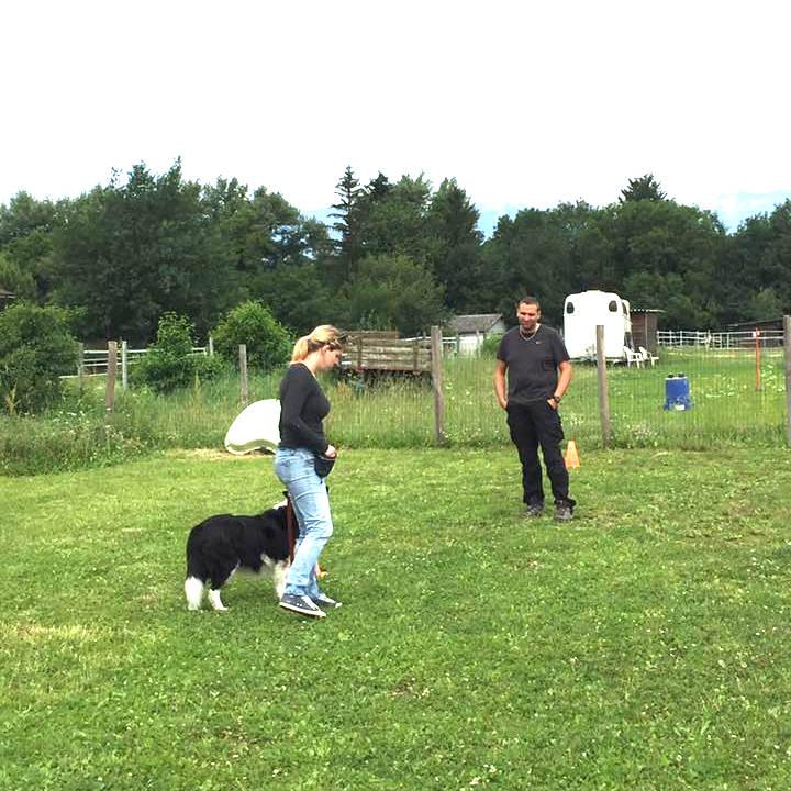C2 + : Éducation de base, pratique avancée - Formation d'éducateur canin - AoA Formation
