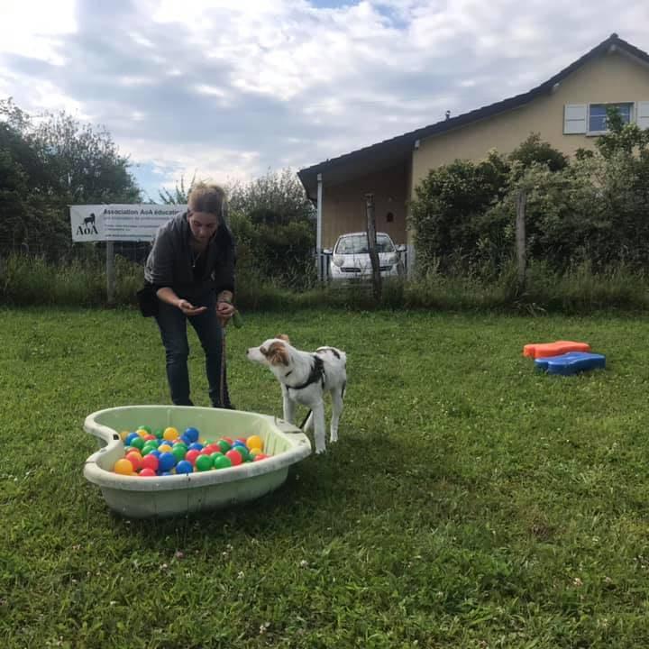 C4 + : Clicker training pratique, Portl games approfondissement - Formation d'éducateur canin - AoA Formation