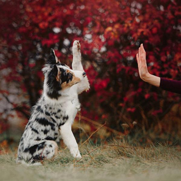 C5 + : Tricks - Initiation aux loisirs canins - Formation d'éducateur canin - AoA Formation