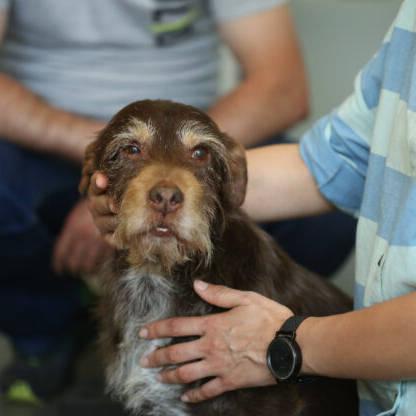 Tellington TTouch pour vous et pour votre chien, les bases - Éducateur spécialisé en soins alternatifs - AoA Formation